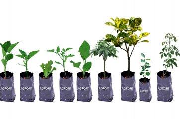 Saco Plástico para Mudas 15cm x 26cm Agrofit Kit 500 unidades - Canal Agrícola