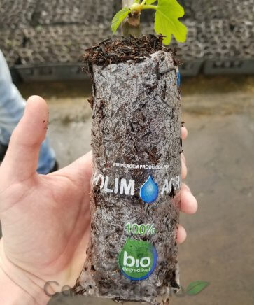 Saco Biodegradável para Mudas Polim-Agri Bio 10x20cm - Canal Agrícola