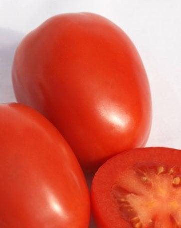 Semente Tomate Híbrido Taiuva Isla (291) - Canal Agrícola