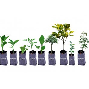 Saco Plástico para Mudas 08cm x 13cm Agrofit Kit 1.000 unidades - Canal Agrícola
