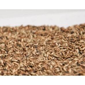 Semente de Capim Mombaça (Panicum maximum) - 20Kg - V/C: 34 (9 a 10 Kg/ha) - Soesp