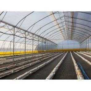 Filme Plástico para Cobertura de Estufa - 150 Microns - Suncover AV Difuso - Canal Agrícola