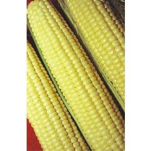 Semente de Milho-Verde Híbrido Itapuã 700 Isla (509) - Canal Agrícola