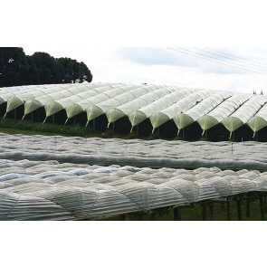 Filme Plástico para Cobertura de Videiras - 140 Microns - Oroplus - Rolo 2,8mx150m - Canal Agrícola