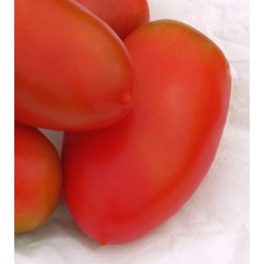 Semente de Tomate Híbrido Oliver F1 Tipo Italiano Isla  (272) - Canal Agrícola