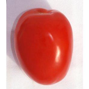 Semente de Tomate Híbrido Cambará Isla (294) - Canal Agrícola