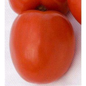 Semente de Tomate Hibrido Buriti Isla (298) - Canal Agrícola