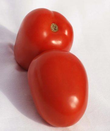 Semente de Tomate Híbrido Imbuia Isla (276) - Canal Agrícola