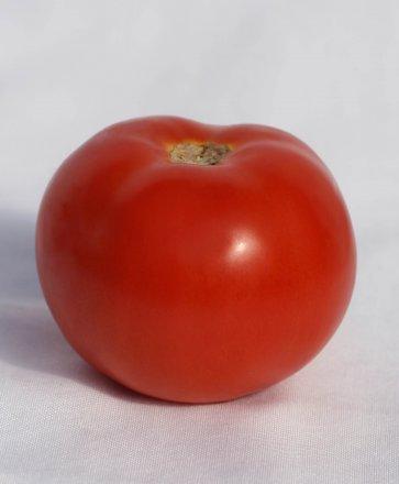 Semente Tomate Híbrido Araucária Isla Envelope com 1000 Sementes (284.43) - Canal Agrícola