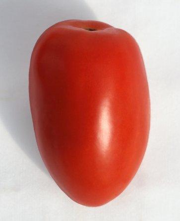 Semente Tomate Híbrido Anjico Isla (290) - Canal Agrícola