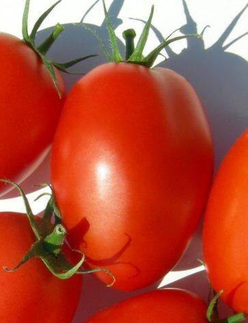 Semente de Tomate Híbrido Candeia Isla (292) - Canal Agrícola