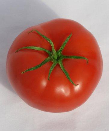 Semente de Tomate Híbrido Ipê Isla (297) - Canal Agrícola