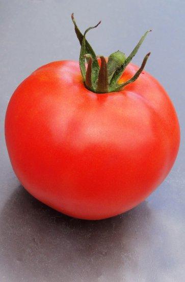 Semente Tomate Híbrido Umbu Isla (282) - Canal Agrícola