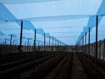 Filme Plástico para Cobertura de Estufa 100 Microns Suncover AV Blue - Largura 4m - Canal Agrícola
